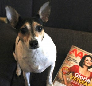 The vet told me that I'l be receiving AARP magazine next year . Actually AARD.