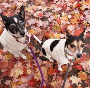 we love crunchy leaves!