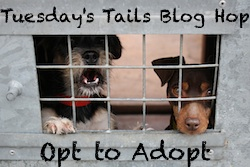 Tuesdays-Tails-Blog-Hop-Official-Badge