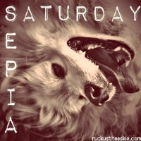 sepia_saturday_blog_hop_badge_200-2