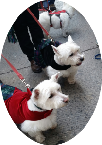 """With Our Westies"" Group gets involved in the Tartan Day Parade!"
